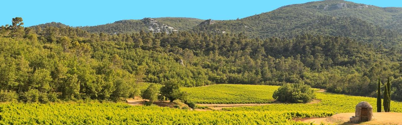 Vignes Château de Cancerilles