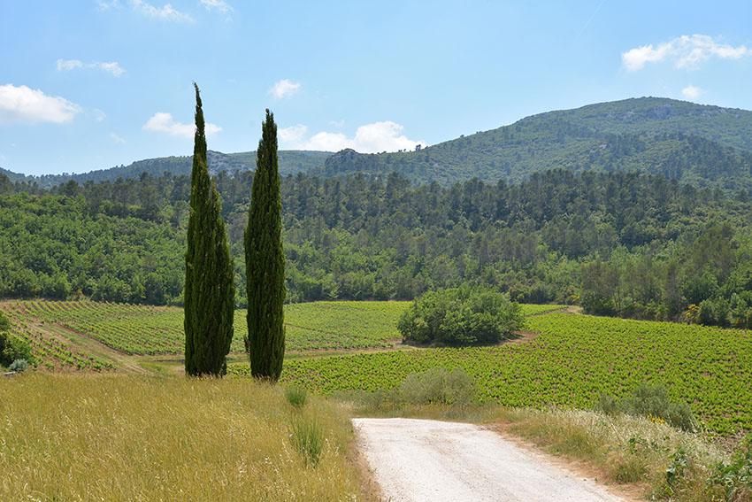Domaine viticole des CancerillesTable et chambres d'hotes
