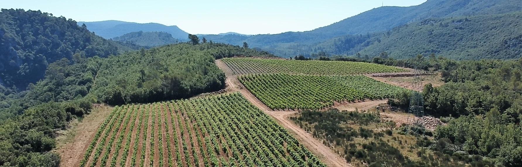 domaine viticole-vins terroir-agriculture biologique
