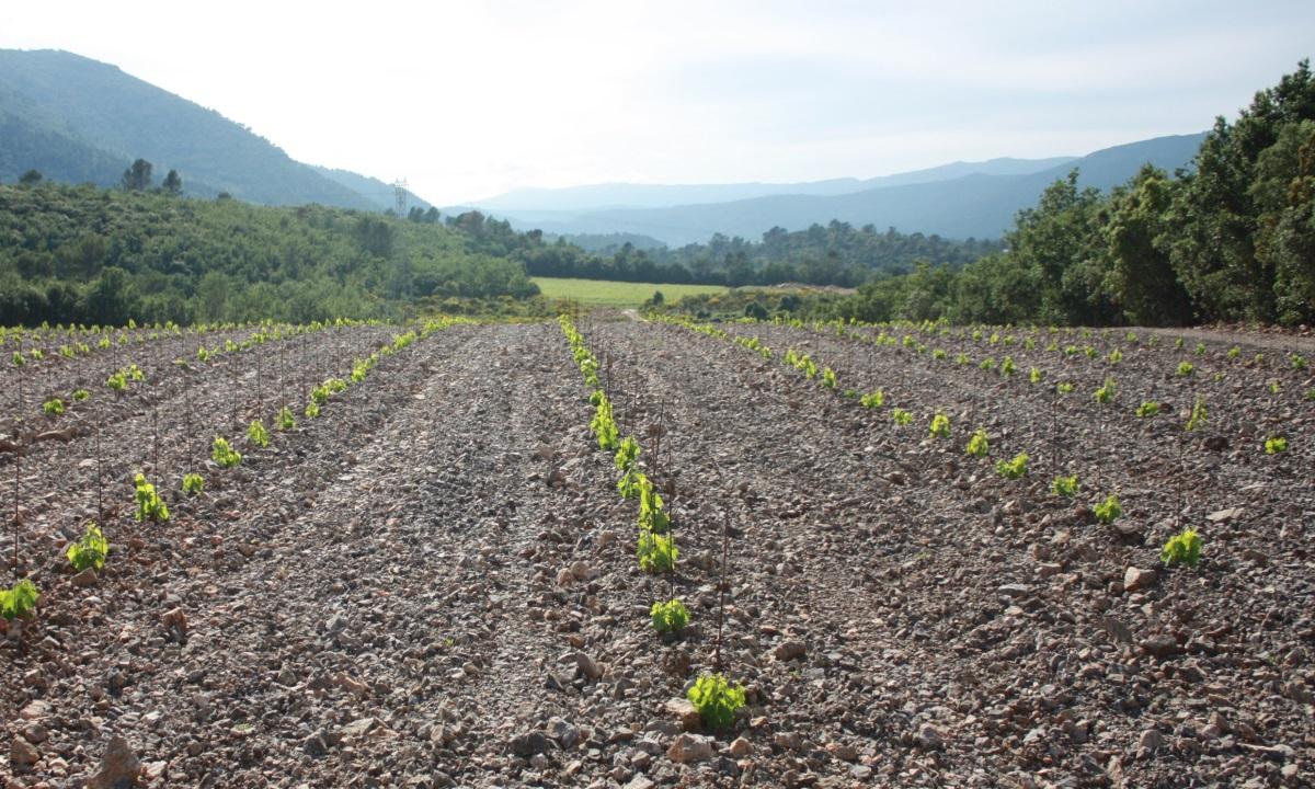 plantation-culture vigne-vente de vins bio