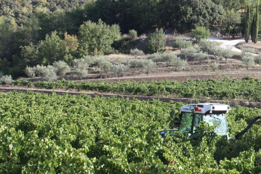 recolte-vignes-vins bio-degustation-vente a la propriete